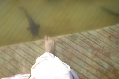 Catfish nibbling your toes? Totally normal.