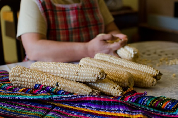 Guatemalan tortillas begin on the cob. Ripe corn is picked and the kernels are removed by hand.
