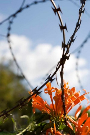 Nairobi... Bright flowers and barbed wire.