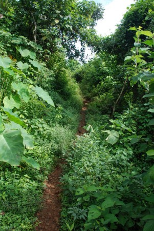 A path between two of Bernardo's fields.  This is the foliage he needs to cut down by hand each year!