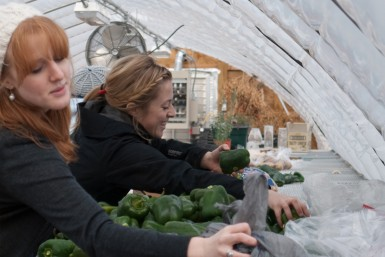 Shepherd's staff organizes fresh vegetables for the Co-Op.